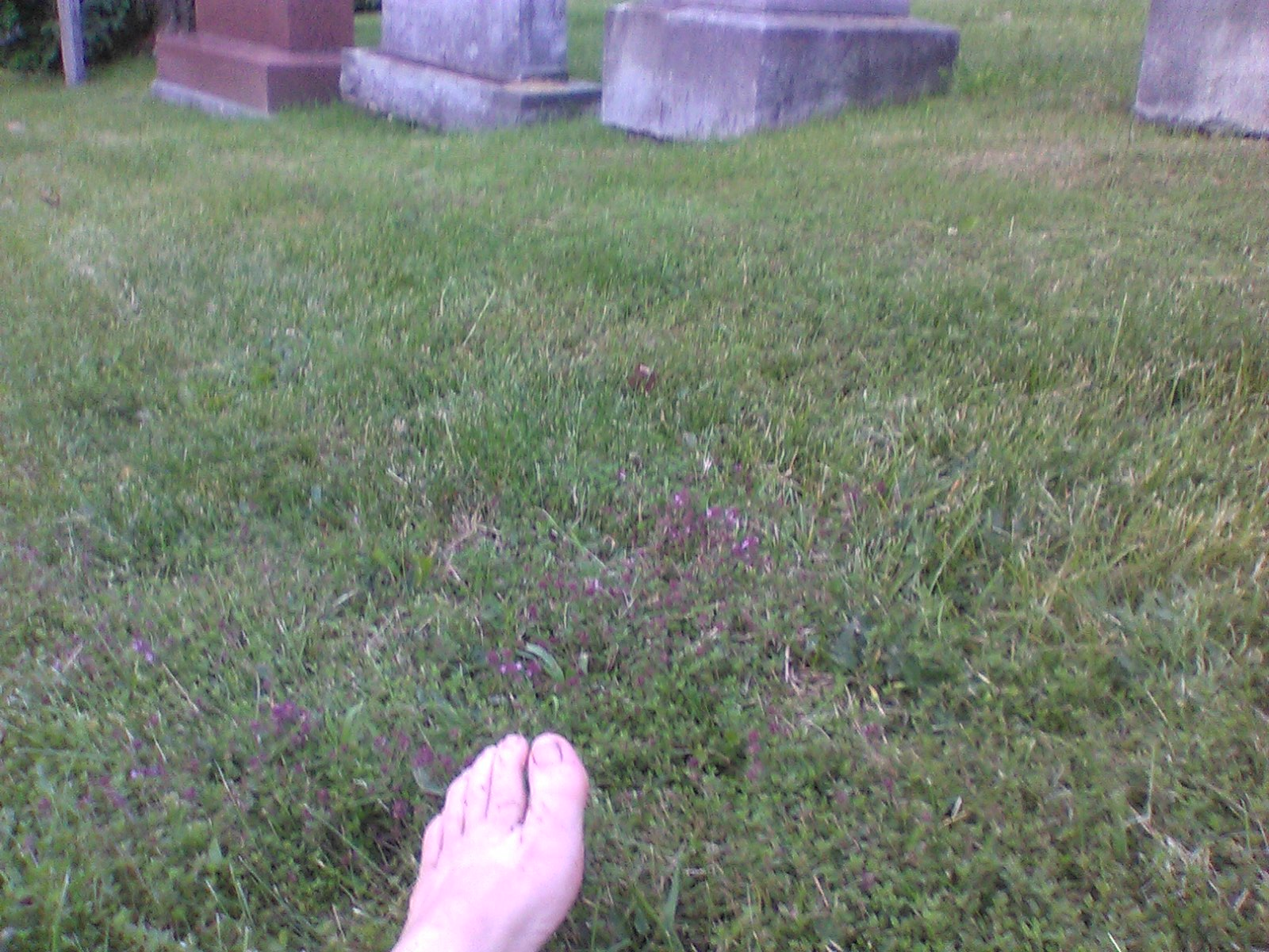 Marche au cimetière Mt-Royal_crédit photo Ève Marie Langevin 009