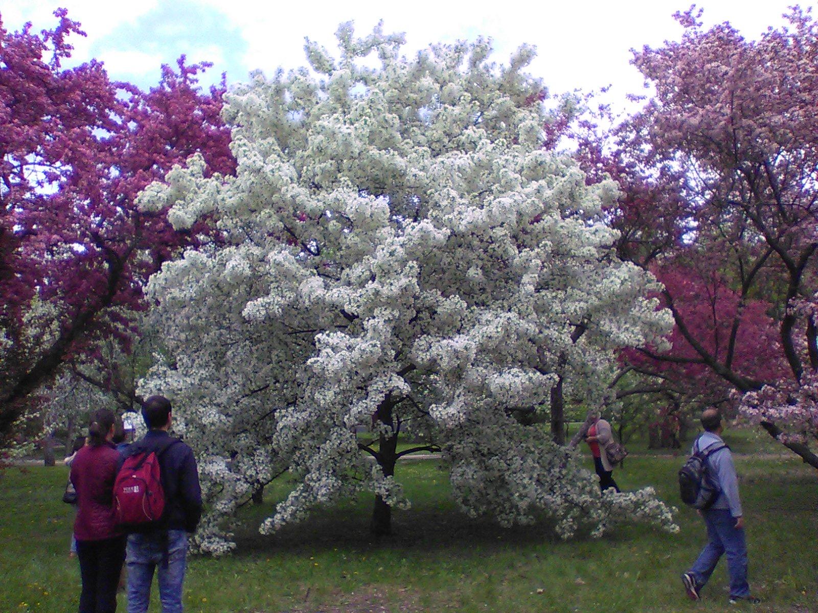 Marche au Jardin botanique1_crédit photo Ève Marie Langevin